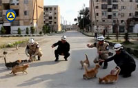 Syrian Civil Defense Feeds Stray Cats
