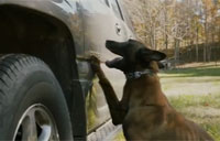 On the Scent: A New Approach to Tactical K9 Training