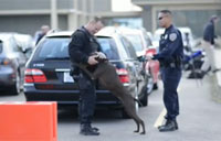 K-9 Teams Drafted for Super Bowl 50