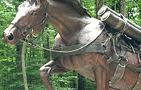 Marine Staff Sgt. Reckless Monument