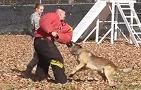 'Old Guard' Military Working Dog takes Down Soldier During Training