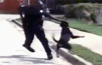 Dog Attacks Officer, Gets Tasered