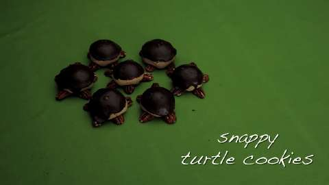day to snappyturtlecookies snappy turtle cookies turtle cookies ...